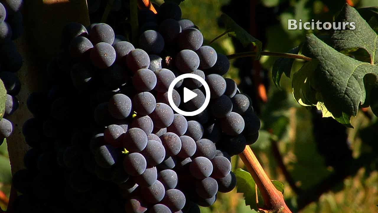 Bra Barbaresco in bicicletta lungo le vie del vino
